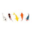 koi carp fishes japanese koi vector image vector image