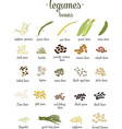 set of legumes and beans in flat style vector image vector image