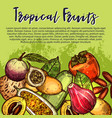 fruits sketch exotic tropical fruit poster vector image vector image