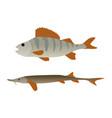 fish aquatic marine animals vector image
