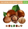 hazelnuts on white background vector image