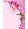 Pink Floral Orchid Background vector image vector image