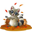 cartoon raccoon in the autumn weather vector image