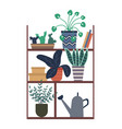 houseplants standing on shelf with books and box vector image vector image