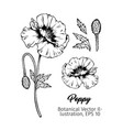 poppies botanical black ink sketches set vector image vector image