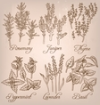 Set of essential herbs vector image