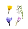 Set of Spring Flowers and Grass vector image vector image