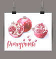 whole and half pomegranate vector image
