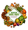 sketch poster of exotic fruits vector image vector image