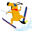 dog on water skiing the pet is engaged in summer vector image