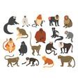 cartoon monkeys exotic tropical animals vector image