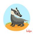 cartoon of wild animal badger vector image vector image