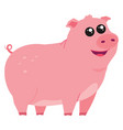 cute little pig on white background vector image