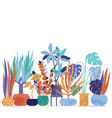 funky flat style house plants standing in line vector image vector image