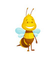 cartoon bee insect character happy fly vector image