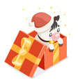 cute cartoon baby cow ox cub gift box isometric vector image vector image