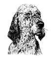 English setter 02 vector image vector image