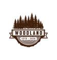 rustic vintage evergreen pines spruce cedar vector image vector image