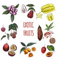 exotic fruits hand drawn collection vector image vector image