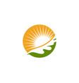 maple oak leaf logo template vector image