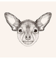SketchToy Terrier Hand drawn face of dog vector image vector image