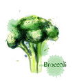 brocoli icon watercolor delicious green vector image vector image
