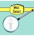 Gryllotalpidae European mole cricket vector image vector image