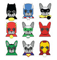 heroes french bulldog in color vector image