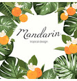 mandarine fruit monstera leaves frame vector image vector image