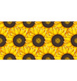 sunflower agricultural plant vector image