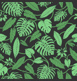tropical pattern with monstera leaves vector image