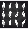 Vintage feather set on chalkboard vector image