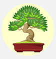 bonsai japanese art form using trees grown in vector image vector image