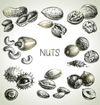 Hand drawn sketch nuts set vector image vector image