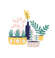 potted houseplants flat vector image vector image