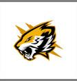 tiger head roaring e sports logo design vector image vector image