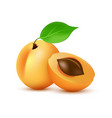 apricot icon in realistic style - icon vector image vector image