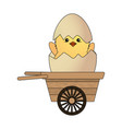 chick in eggshell vector image vector image