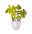 indoor houseplant in white pot green potted vector image vector image