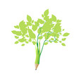 sprouted pencil and became a simple green bush vector image