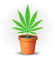 hemp grows in flowerpot vector image