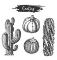 set isolated cactus or cacti sketch vector image vector image