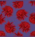 red chrysanthemum flower on purple background vector image