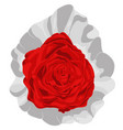 red rose in plastic package vector image