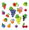 Set of flat berries vector image