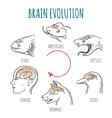 Brain Evolution vector image