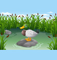 cute duck on the rock vector image vector image