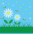 spring blue sky day with simple white daisy garden vector image