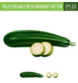 zucchini on white background vector image