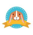 cute animal label emblem vector image